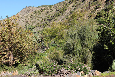 Lantana camara? (El Jardín Botánico del Descubrimiento de Vallehermoso, just north of Vallehermoso)
