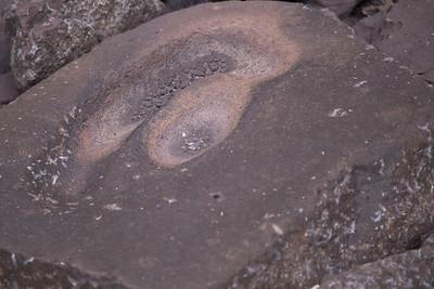 Seka (Piper methysticum) grinding stone at Lelu Ruin Historic Site, Lelu, Kosrae, FSM