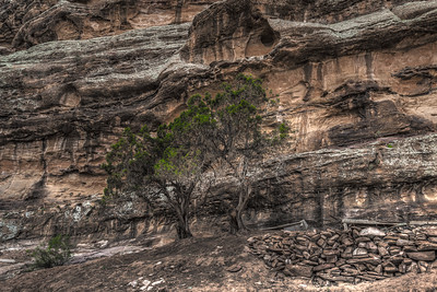 Tree at the foot of a cliff in Petra Jordan