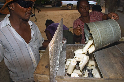 Grating peeled cassava using a mechanical grater. A motor engine turns the grater inside the wooden box. Peeled cassava is put in the opening at the top and then pushed with a handle into the grater. This is in preparation for the making of cassava bread.