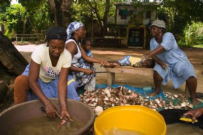 Garifuna women peeling cassava in preparation for making cassava bread.