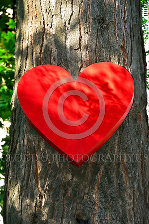 Cult-LOVE 00007 A large red heart, the universal symbol of love, attached to a tree in Odessa, Ukraine, 10-2015, by Peter J Mancus