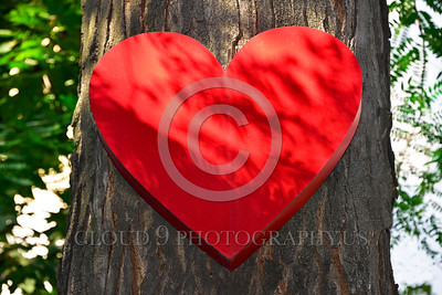 Cult-LOVE 00006 A large red heart attached to a tree--the universal symbol of love, in Odessa, Ukraine, 10-2015, by Peter J Mancus