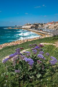 Flowers on a hill overlooking Jaffa