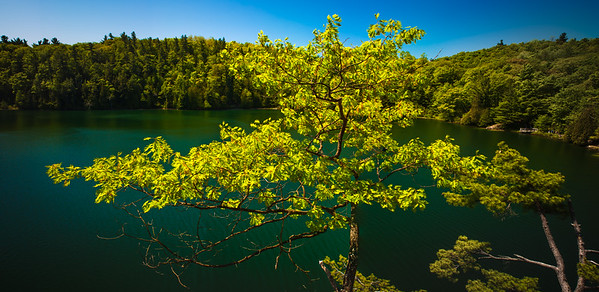 Tree overlooking Pink Lake