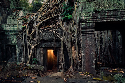 Fig tree devouring the temple, Ta Prohm, Angkor.