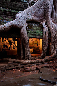 Ta Prohm temple at dawn, Angkor archaeological complex.