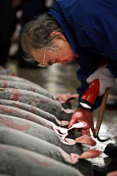 Wholesale buyer inspecting the tuna, Tuna auction at Tsukiji fish market, Tokyo.