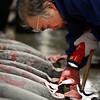Wholesale buyer inspecting the tuna, Tuna auction at Tsukiji fish market, Tokyo.