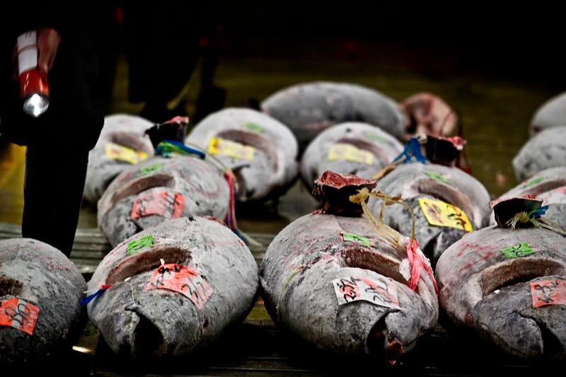 Tuna auction at Tsukiji fish market, Tokyo.