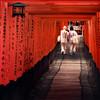 Torii gates of Fushimi Inari, Kyoto.