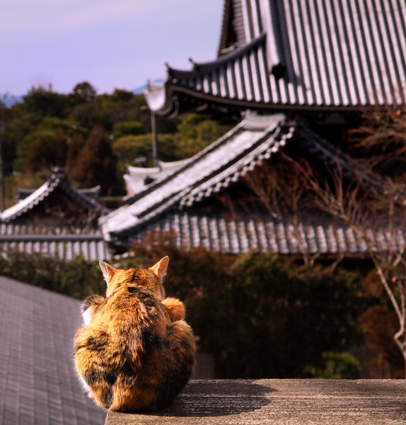 """Philosopher Cat""<br /> <br /> Along the Path of Philosophy, Kyoto."