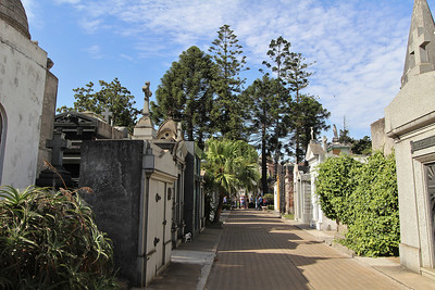 Araucaria spec. at La Recoleta Cemetery (Cementerio de la Recoleta), located in the Recoleta neighbourhood of Buenos Aires. It contains the graves of notable people, including Eva Perón, Raúl Alfonsín, and several presidents of Argentina.)