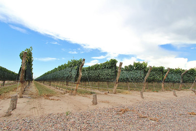 Visit to a vineyard in Mendoza