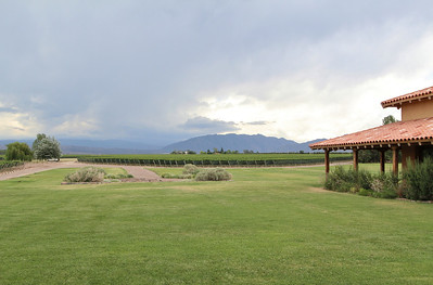 Vineyard in Mendoza, view toward a thunderstorm in the Andes