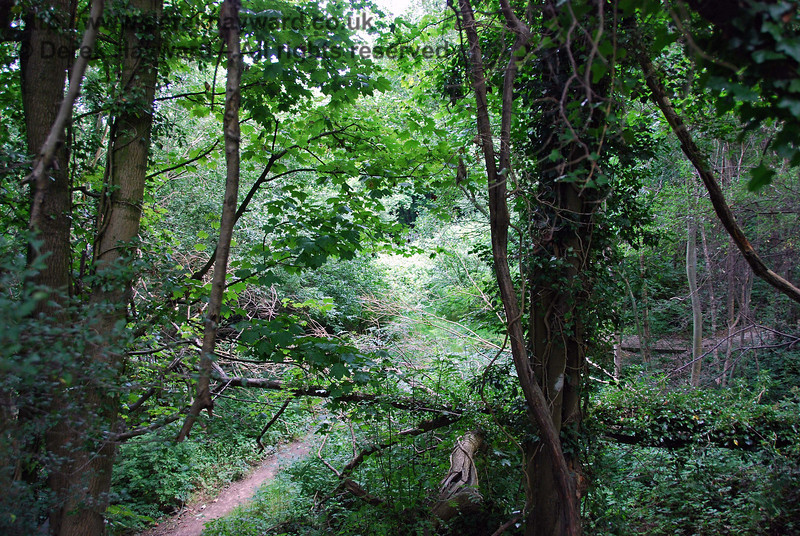 A second view down into the cutting looking east in the general direction of the old station at Uckfield. 27.07.2008