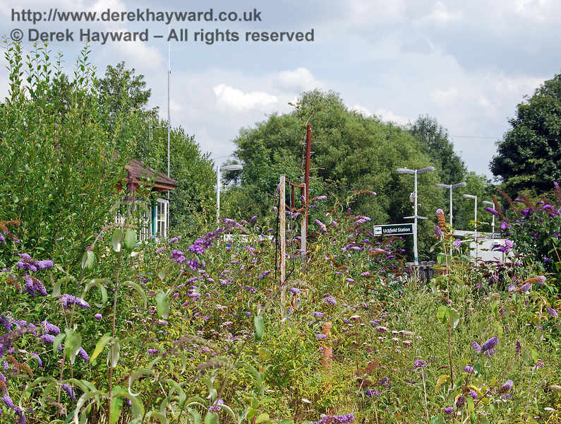 Perhaps the most sad picture in the collection.  A glimpse of the inadequate single platform station now serving the large town of Uckfield.  The old signalbox is on the left.  The former level crossing and road are both hidden by the bushes. Uckfield Old Station 27.07.2008.