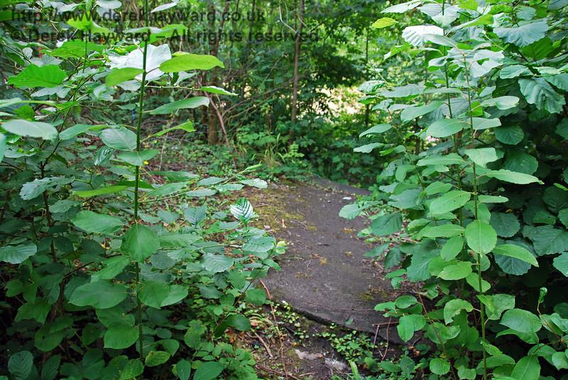 Believe it or not, this is the slope at the southern end of the down platform at the old Uckfield Station. 27.07.2008