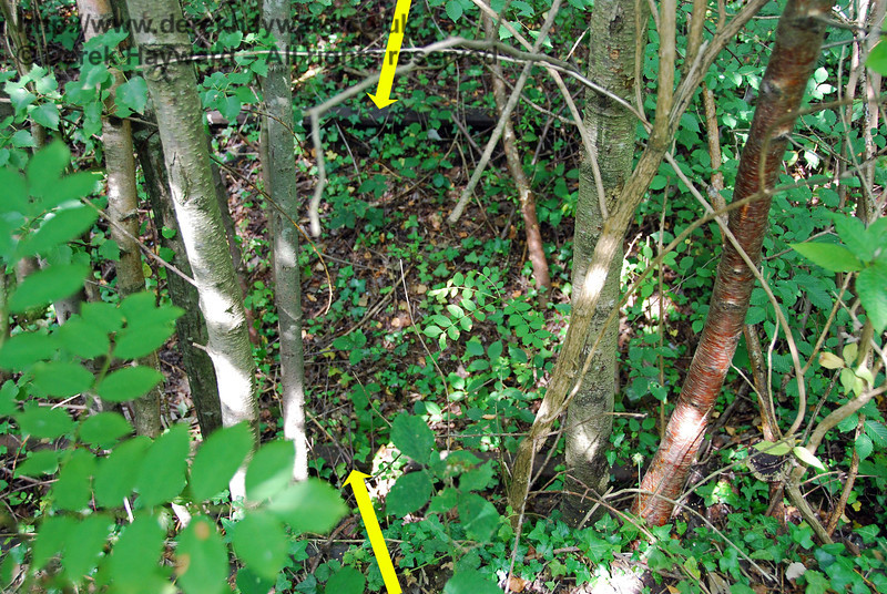 This view looks down from the platform on to the Down track.  It is very hard to see, but the track is still in situ.  Trains once ran to the coast from this busy two platform station, and in the early days there was a very large staff. Uckfield Old Station 27.07.2008