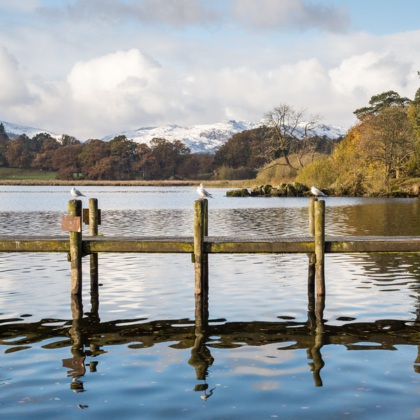 Gulls on #Windermere pier at Ambleside