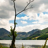 Buttermere, Lone Tree
