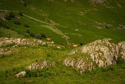 Wild Deer, Easdale, Grasmere