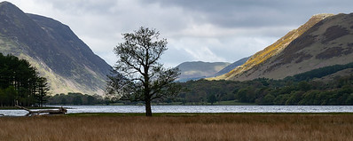 Lonely Tree (south)
