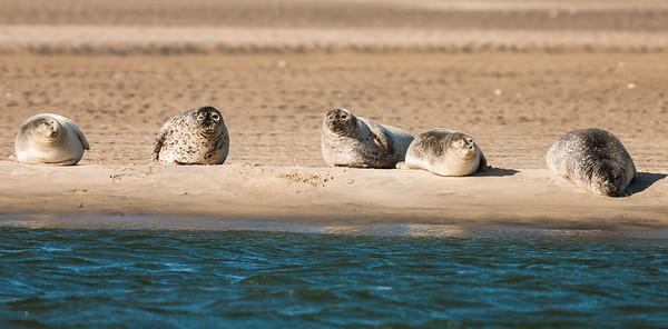 Seals 01/02/2015
