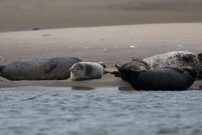 Seals 02-20-2016