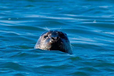 Seals 03\14\2012
