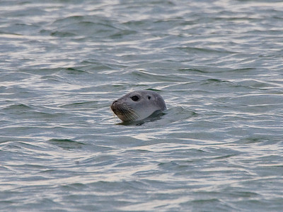 The Seals Are Back In Town