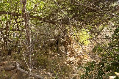 Old wall separating plantation Habaai and Otrabanda