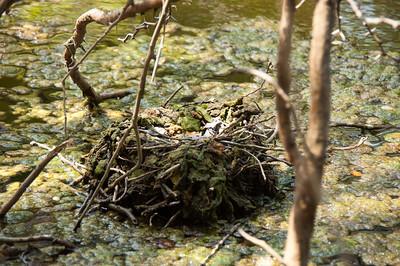 An abandoned nest