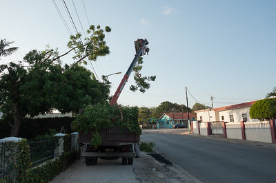 Trimming of a Neem tree