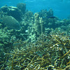 Healthy shallow water reef community
