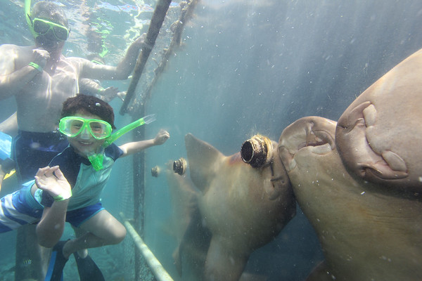 Alex feeding the Nurse Sharks. Just look at that smile....to say he was excited to swim with all these sea creatures would be the understatement of the year!