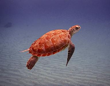 Curacao, Snorkeling