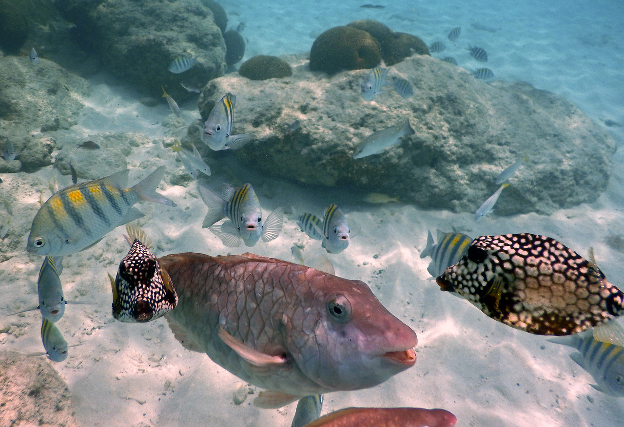 Fish on right is a Spotted Trunkfish