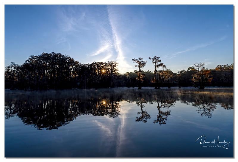 Caddo Lake Landscape