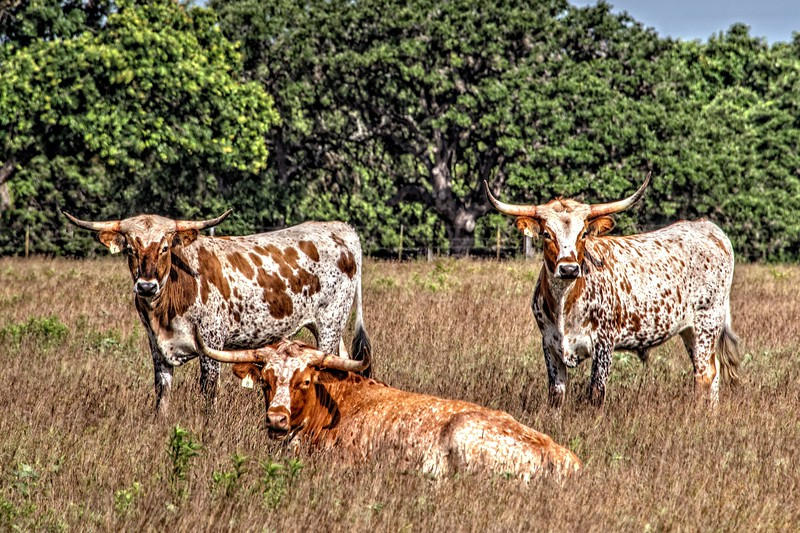 A New Generation of Longhorns