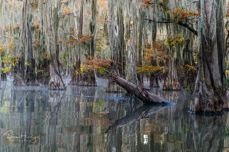 Caddo Lake reflections
