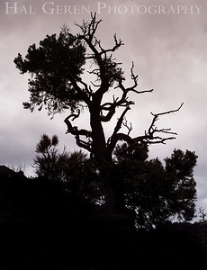 Gnarly Silhouette 1907S-GS2E1