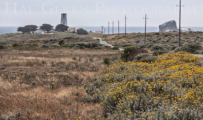 Piedras Blancas Lighthouse Point Piedras Blancas, California 1305C-PBL1