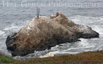 Egg Island Devils Slide, CA 1903C-EI1