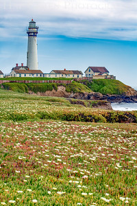Pigeon Point Lighthouse 2102C-PP1