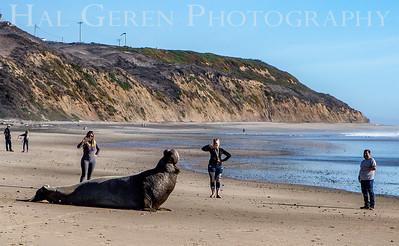 Elephant Seal getting a bit pissed off 2102C-ESAT1