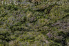 Algae Mat with Butterfly Wing<br /> Elkhorn Slough, California<br /> 1503D-A1