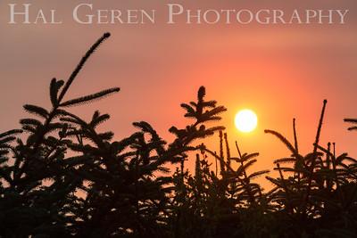 Gold Beach Sunset Prairie Creek Redwoods, California 1708C-S1