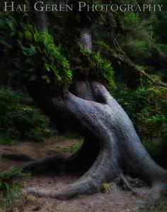 Fern Canyon Prairie Creek Redwoods, California 1708C-FCT1E1
