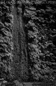Fern Canyon Prairie Creek Redwoods, California 1708C-FCF2A1BW1